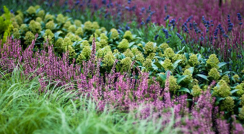 Gärtnerei Manz in Neckartenzlingen Pflanzen