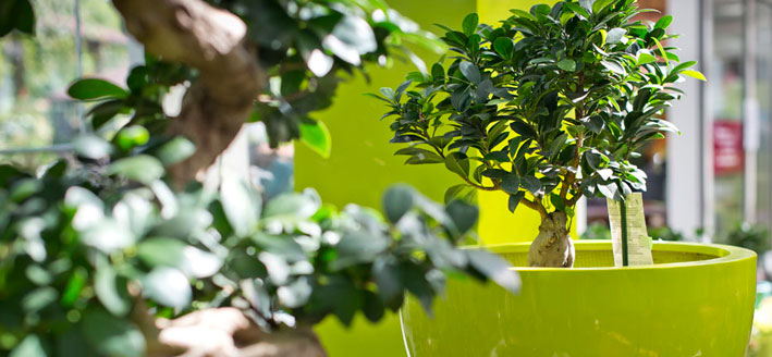 Innerraum Pflanzen Gärtnerei Manz