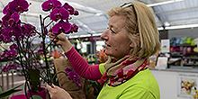 Dorothea Berger Verkauf Pflanzenmarkt
