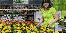 Liane Strohm Verkauf Pflanzenmarkt