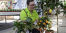 Verena Hessenthaler Azubi Zierpflanzengärtnerin